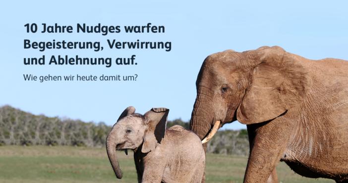 Elefant stupst sein Junges in die richtige Richtung