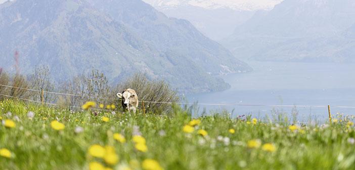 Fünfwaldstätte – Zentralschweizer Geschichten