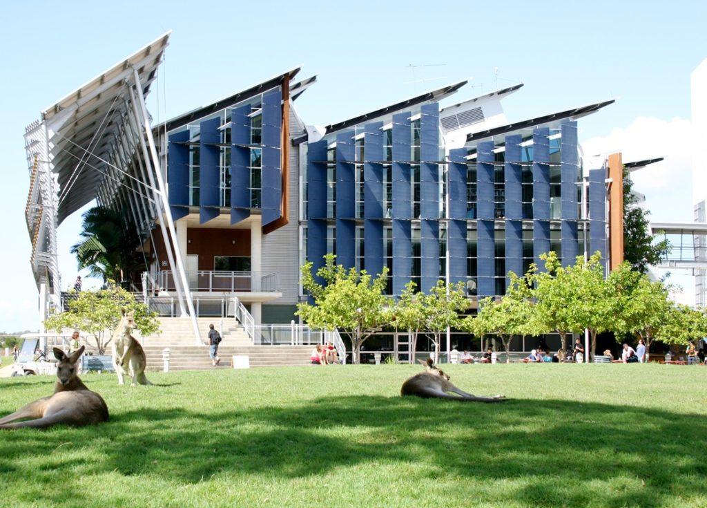 Sympathischer Besuch für die Studierenden: Kängurus auf dem Campus der University of the Sunshine Coast in Australien.