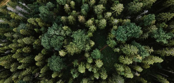 Wald 4.0: Überlebenshilfe für Erholungsräume